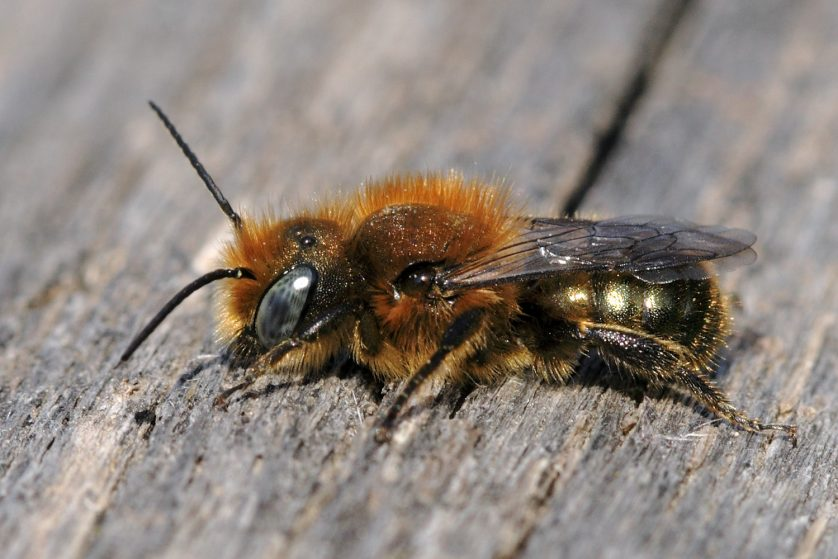 A bee on a piece of wood.