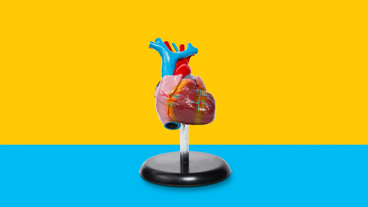 An image of a heart symbolizes taking blood thinners for AFib