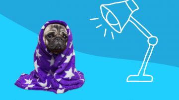 A pug wrapped in a blanket represents seasonal affective disorder