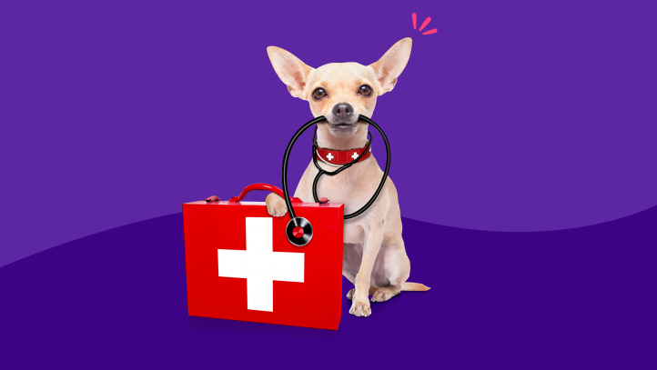 A dog with a first aid kit for pets