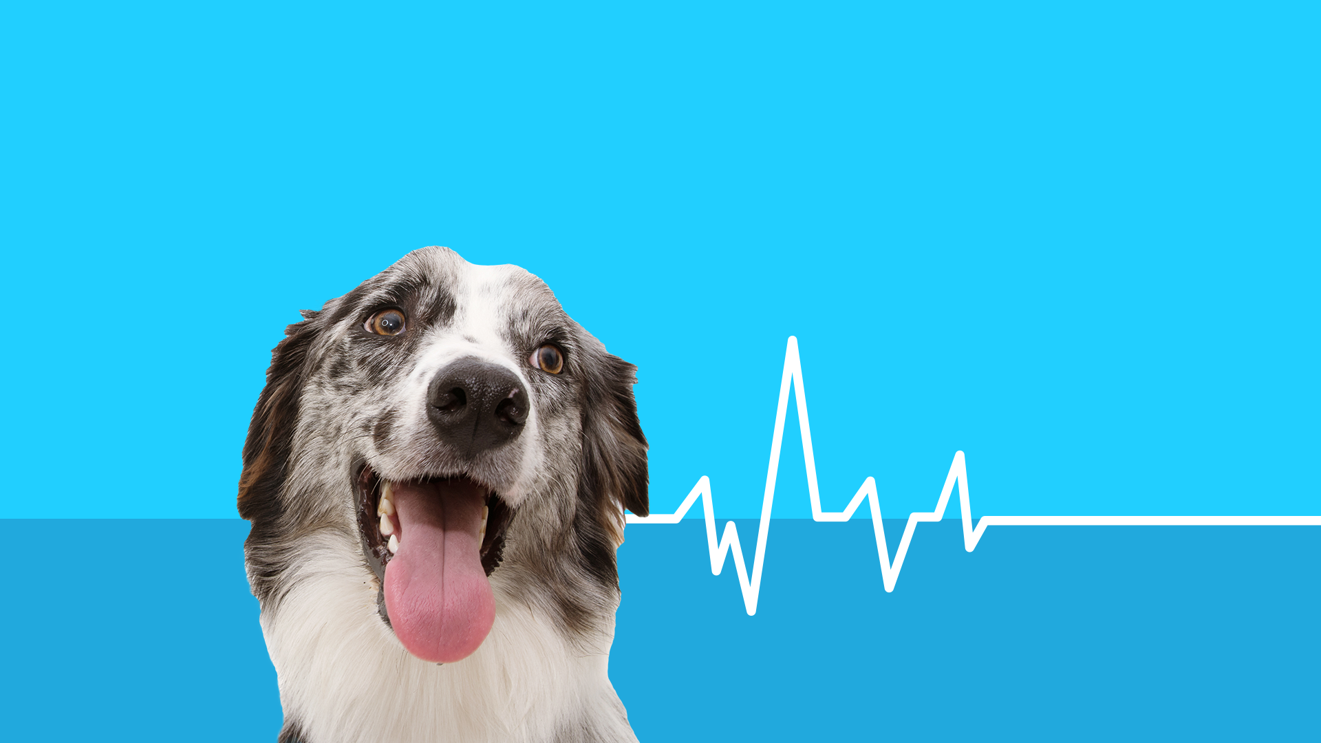 How to manage diabetes in dogs
