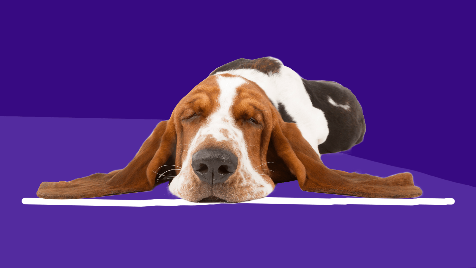 How to treat seizures in dogs