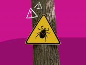Lyme disease symptoms—and how to protect yourself