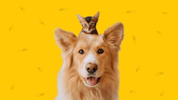 Where to fill your pet's prescriptions