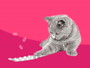 When does your pet need antibiotics?