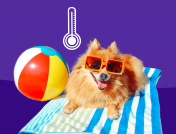 Protect your pup this summer: Learn the signs of heat exhaustion in dogs