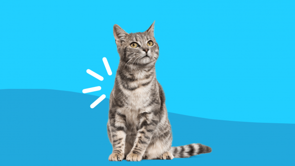 How to recognize—and treat—arthritis in cats