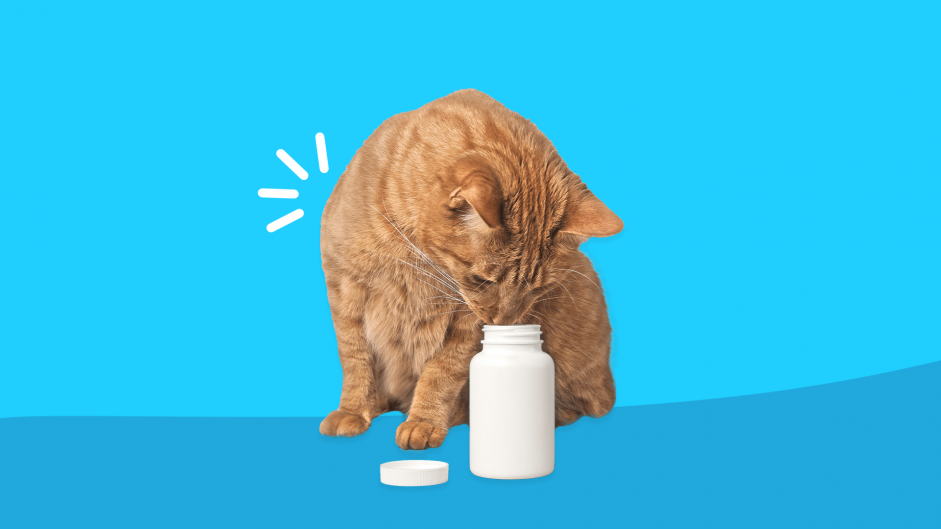 Help! My pet ingested one of my pills