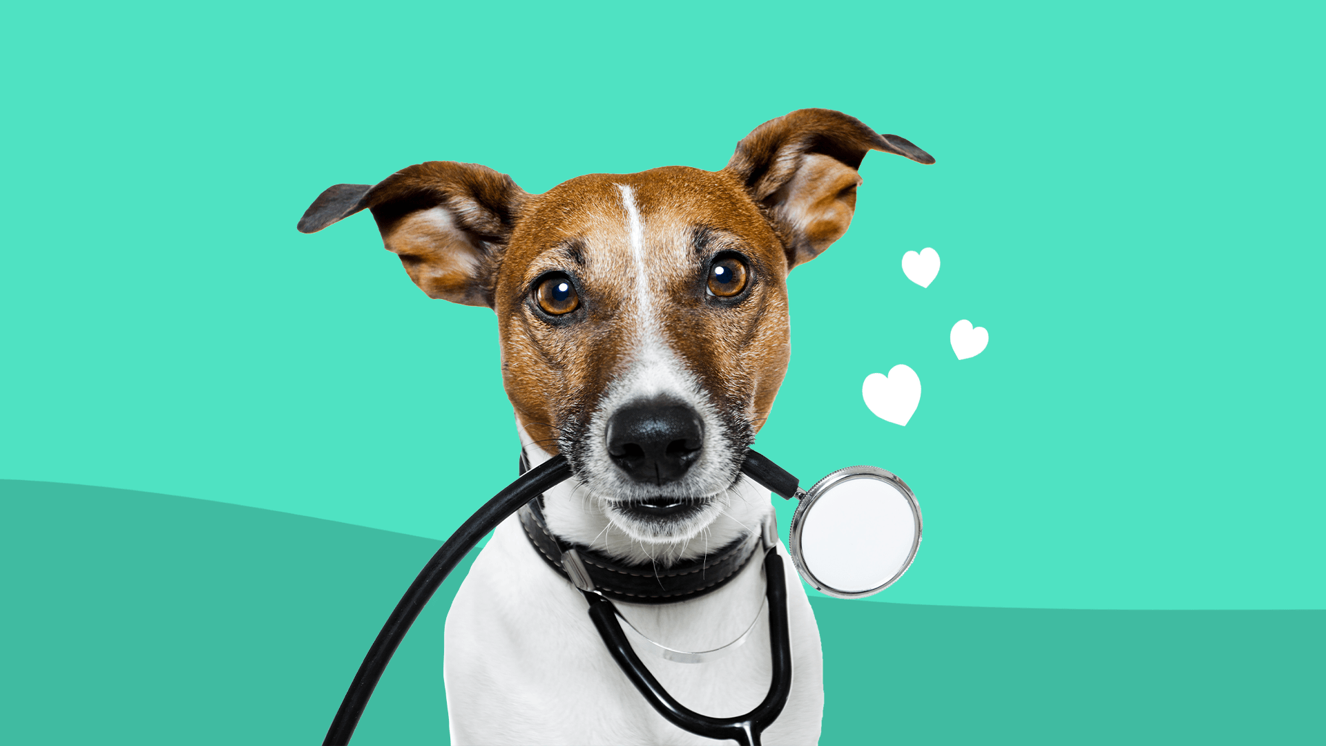 How to manage high blood pressure in dogs